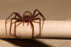 Spider on a pencil Stock Photos