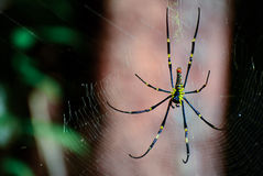 Spider perched on the cobweb. Spider perched on the cobweb and waiting victim Stock Photo