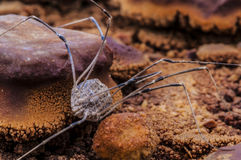 Spider petrified by geyser water close-up cold geyser utah Stock Photo
