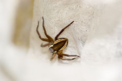 Spider. Pets animals arachnid  animal brown Royalty Free Stock Image