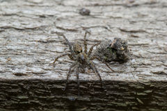 Spider pets animals Stock Image