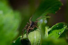 Spider pets animals Stock Photography