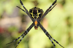 Spider. Photo image  with green background  and spider Royalty Free Stock Photography