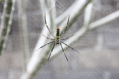 Spider. Photo image with tree and spider web Royalty Free Stock Photo