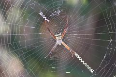 Spider Photographs royalty free stock photography