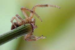 A spider. On the plant Royalty Free Stock Images