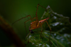 Spider in plant macro. Spider jumper nature stock photo