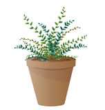 Spider plant with pot Royalty Free Stock Photos