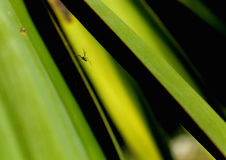 Spider and plant Royalty Free Stock Image