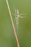 Spider on plant stem Stock Image