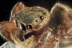 Spider portrait royalty free stock photo