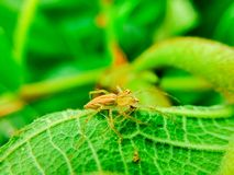 The spider prey Stock Images