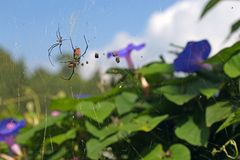 Spider and prey over flowers Stock Images