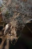 At the spider quilt. Overblown weed wrapped in cobwebs autumn morning Royalty Free Stock Photos