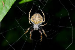 Spider, ranomafana, madagascar Stock Photo