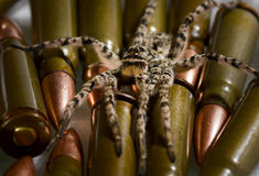 Spider ready for attack over military munitions Royalty Free Stock Image