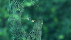 Spider real time stock footage
