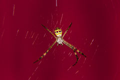 Spider Red background Stock Photos
