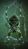 Spider Rest. Scary spider resting on web stock photo
