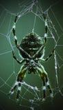 Spider Rest Stock Photo