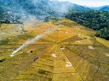 Spider Rice Fields stock photos