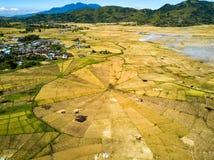 Spider Rice Fields stock photo