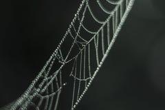 Spider& x27; s网,水,早晨露水滴  免版税库存照片