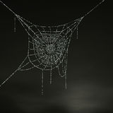 The spider's nest. Stock Image