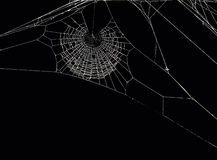 Spider's net Stock Photography