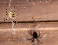 Spider`s shadow on the wood royalty free stock images