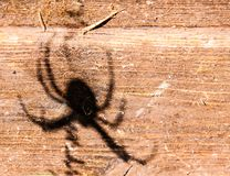 Spider`s shadow on the wood royalty free stock image