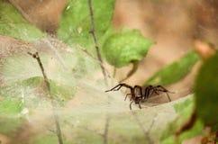 Spider& x27; s sieć obraz royalty free