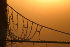 Spider's suspension bridge. A frosted spider's web backlit by the early morning sunrise Stock Photos