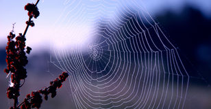 Spider's Web. And nearby supporting twigs Royalty Free Stock Image