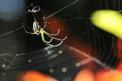Free Spider S Web Royalty Free Stock Photos - 13321518
