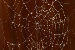Spider's web. And morning dew stock photos