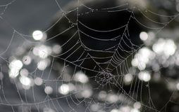 Spider's Web. Water drops on a spider's web by a lake-side Royalty Free Stock Photos