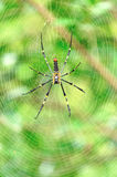 Spider with its web Stock Images