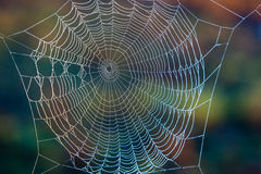 Spider's web. Beautiful network of threads a spider makes Royalty Free Stock Photos