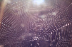 Spider's web Royalty Free Stock Photography