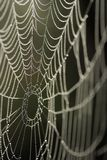 A spider's web. A shallow Depth of field spider web Royalty Free Stock Images