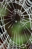 A spider's web. A shallow Depth of field spider web Stock Photo