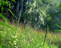 Spider's web. With morning dew Royalty Free Stock Photos