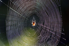 Spider´s web Royalty Free Stock Photos