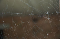 Spider's web. On dark background Stock Images