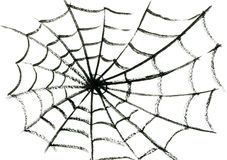 Spider's web. Art freehand watercolor sketch outline illustration of one black halloween holiday spider's fragile cobweb on white empty background Stock Photos