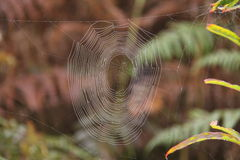 Spider's Web. Stock Images