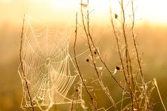 Spider`s web closeup with drops of dew at dawn. Wet grass before sun raise. Spider web with droplets of water. Natural stock photos