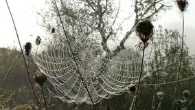 Spider`s Web. Covered in dew stock photo