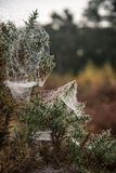 Spider's web covered in dew on cold Autumn morning Royalty Free Stock Photography